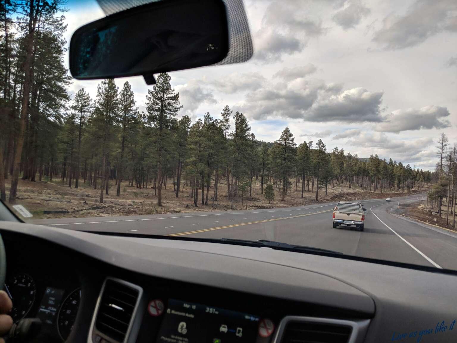 Pine forest, Arizona