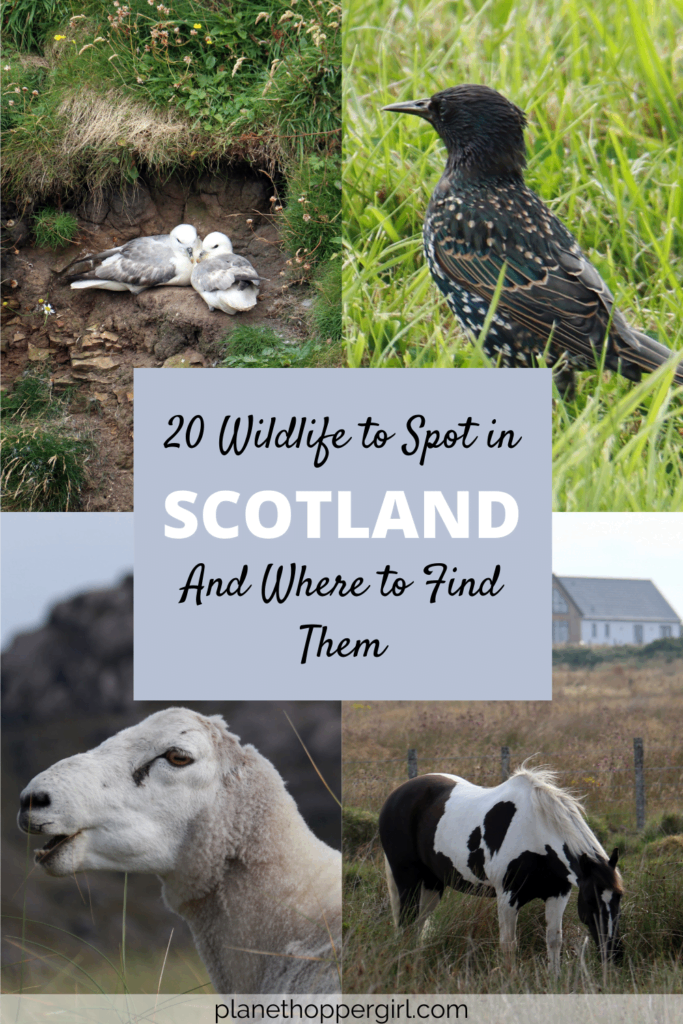 20 Wildlife To Spot in Scotland and Where to Find Them