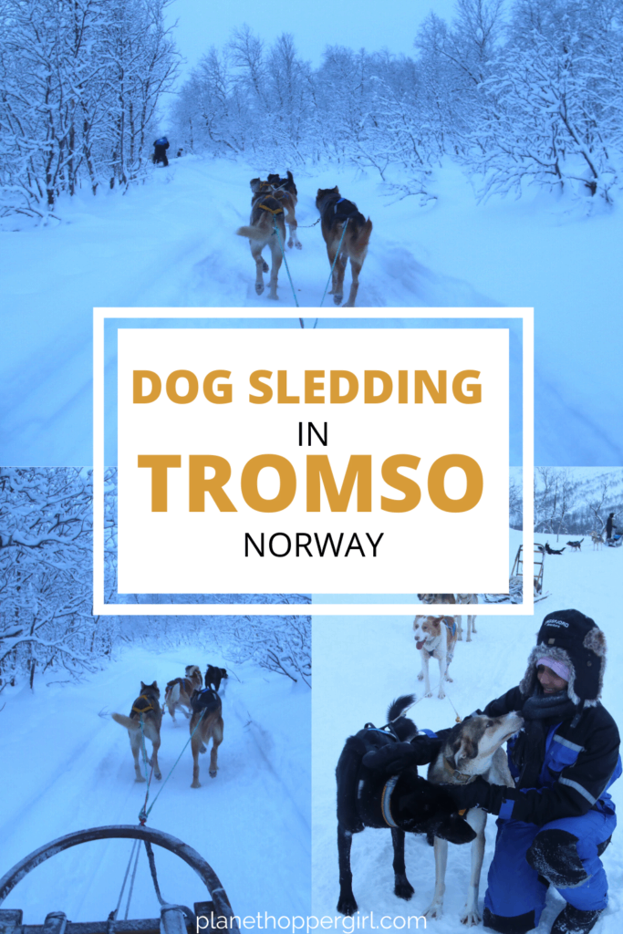 Dog Sledding Experience in Tromso Norway