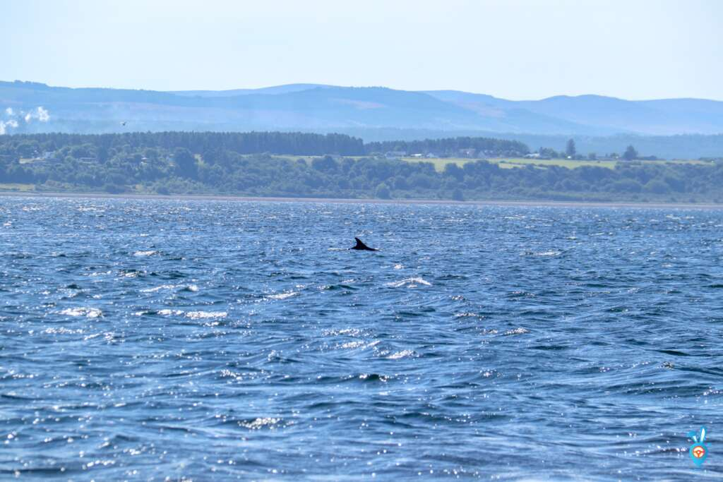 Chanonry Point Dolphins watching