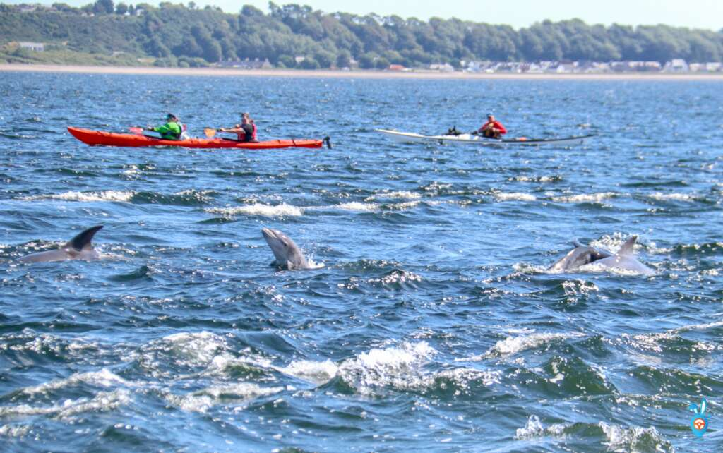 Dolphin Watching in Inverness