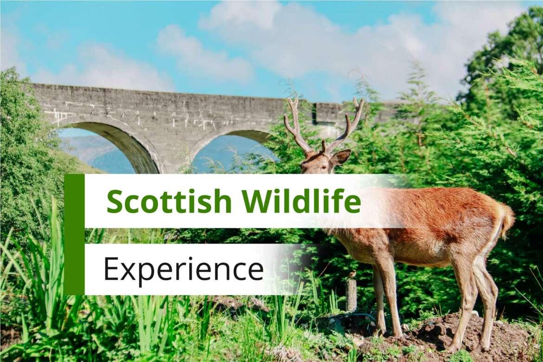 Wild Animals in Scotland