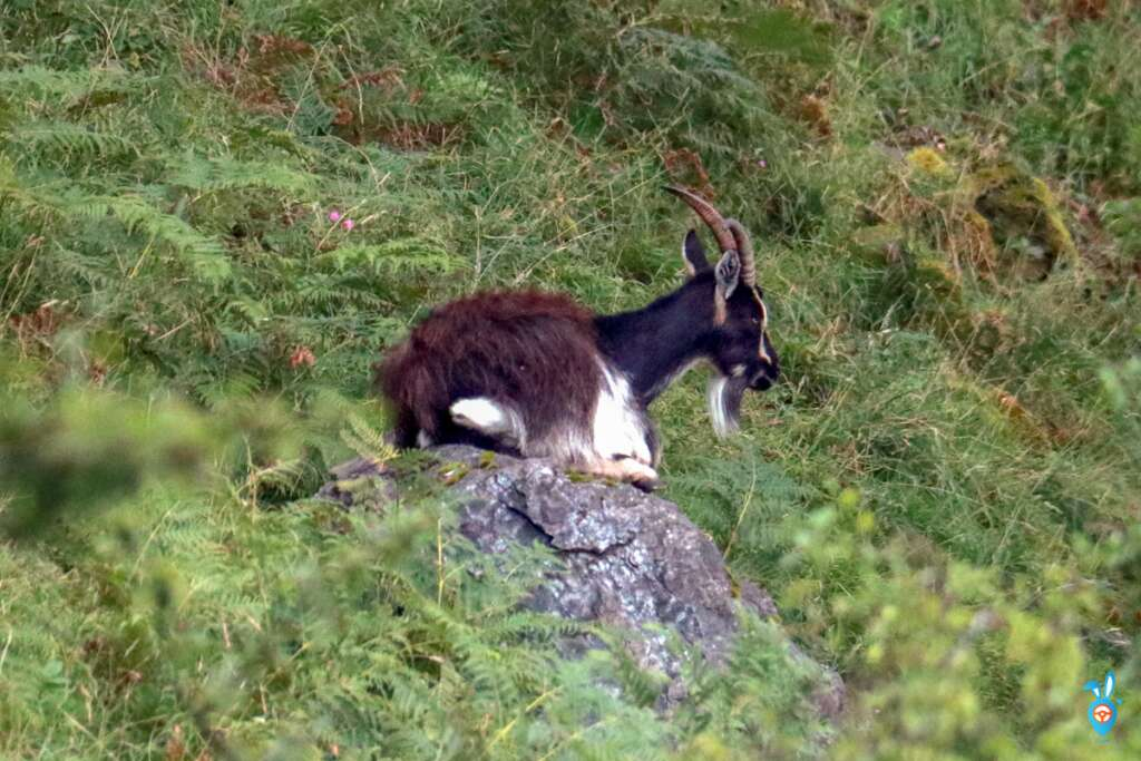 Goat Isle of Kerrera
