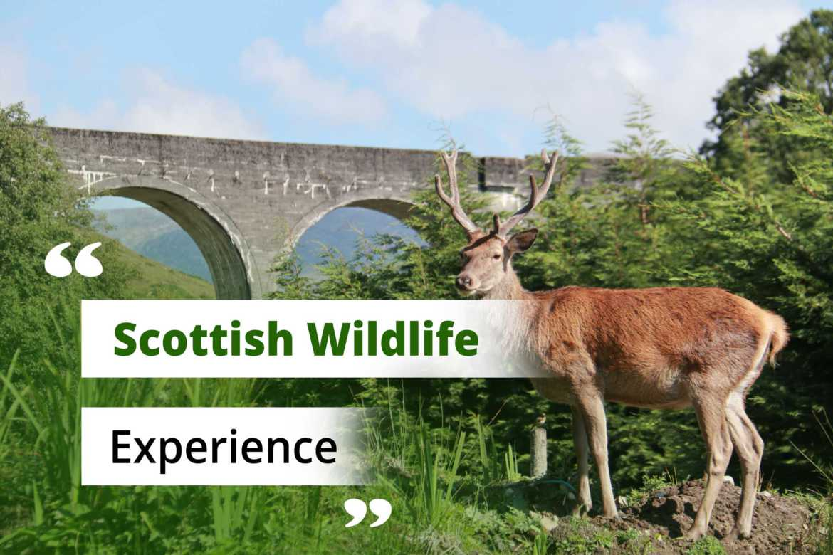 Wild Animals in Scotland