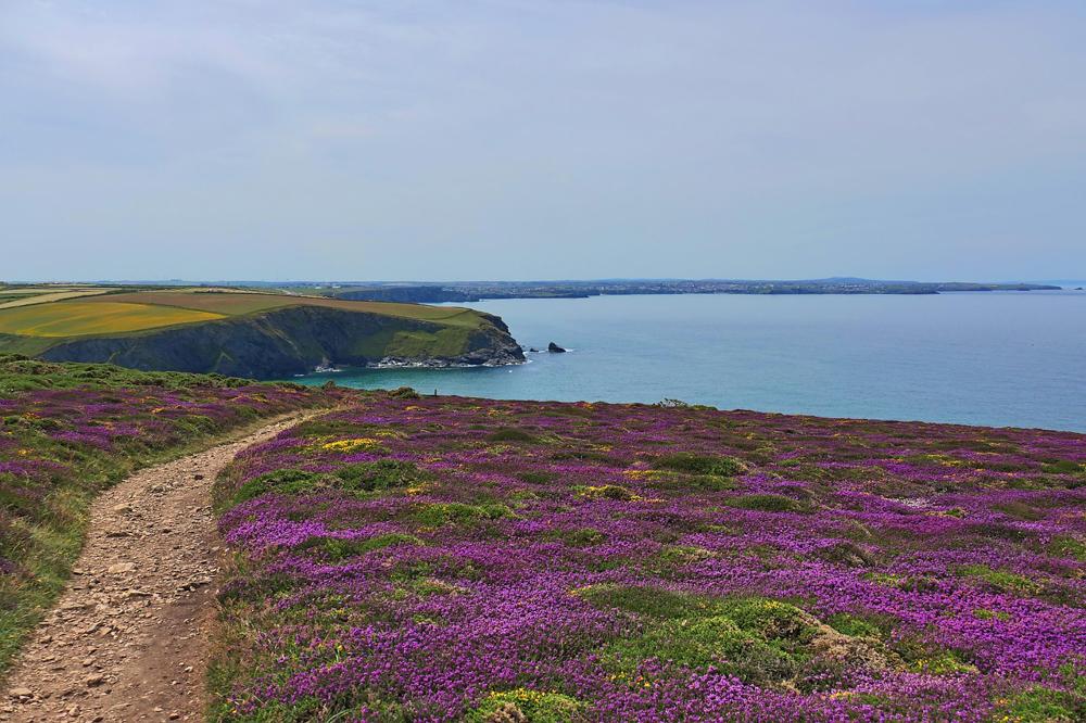 Spring in Cornwall, UK