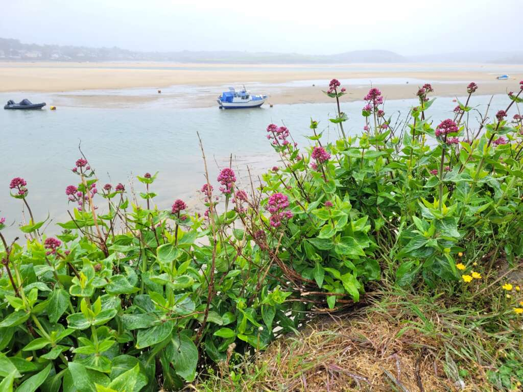 Padstow Cornwall Road Trip Itinerary