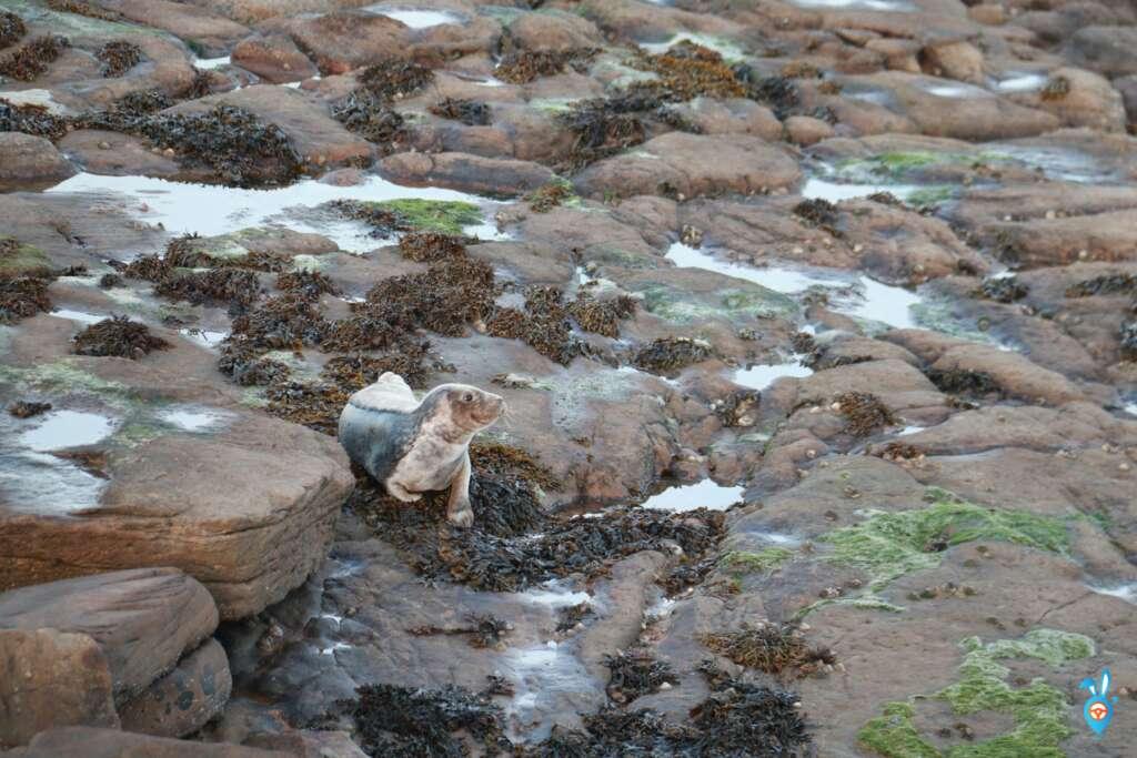 whitley bay beach cove seals st marys island