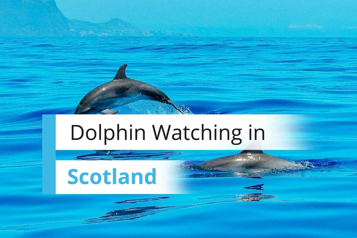 Dolphin Watching in Inverness Scotland