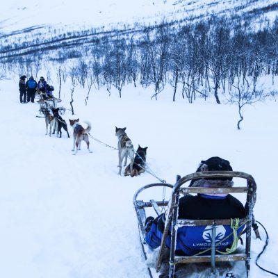 Dog Sledding Adventure